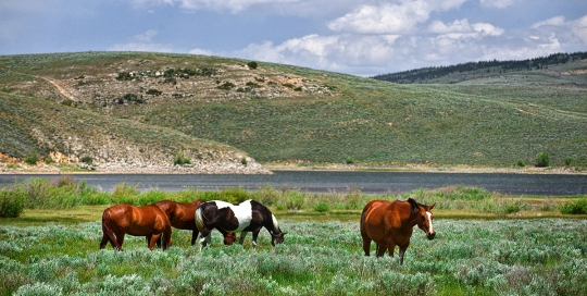 Horses By the Scofield Reservoir