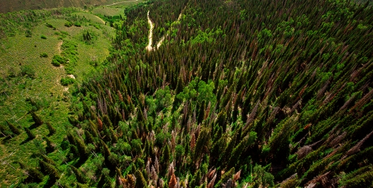 Aerial View of the Scofield Forests