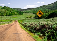 Road to Recreational Four Wheeling in the Scofield Mountains